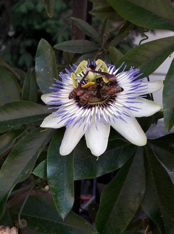 laboratorio-api-forturagiocattoli